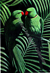 Green Parrots Menu Cover